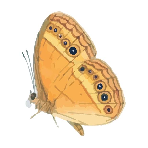 Butterflies Volume 1 messages sticker-10