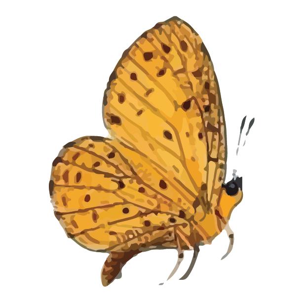 Butterflies Volume 1 messages sticker-2