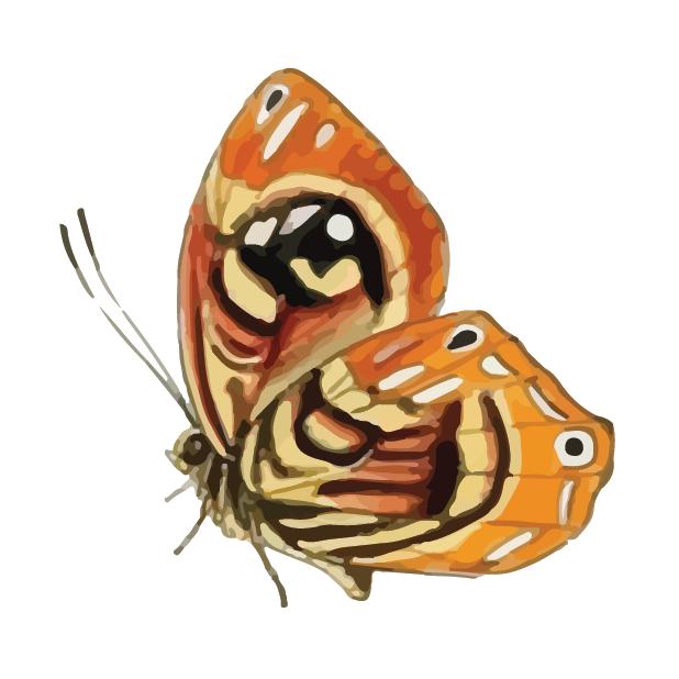 Butterflies Volume 1 messages sticker-9