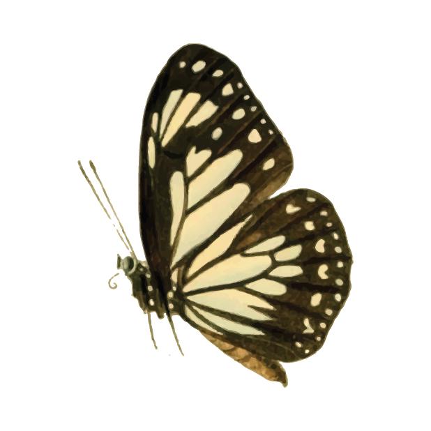 Butterflies Volume 1 messages sticker-11