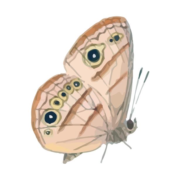 Butterflies Volume 1 messages sticker-5