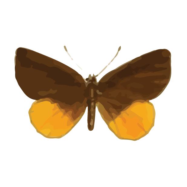 Butterflies Volume 1 messages sticker-7