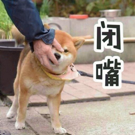 Cute Dog Emoji messages sticker-11