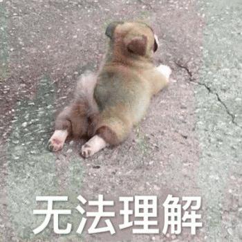 Cute Dog Emoji messages sticker-2
