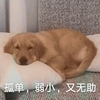 Cute Dog Emoji messages sticker-4