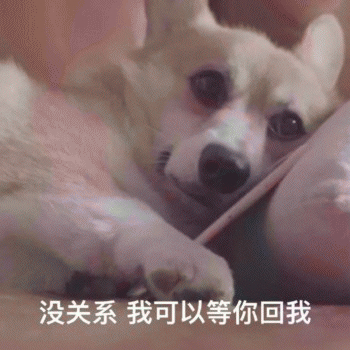 Cute Dog Emoji messages sticker-5