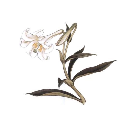 酷爱水墨花-Ink Flowers messages sticker-6