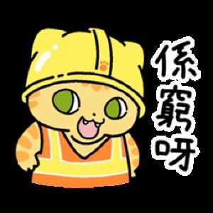 皇金钞级喵 messages sticker-9