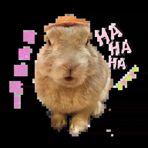 翔不臭之兔 messages sticker-4