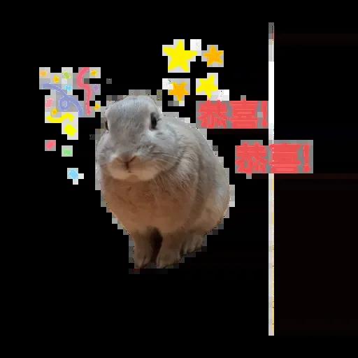 翔不臭之兔 messages sticker-2