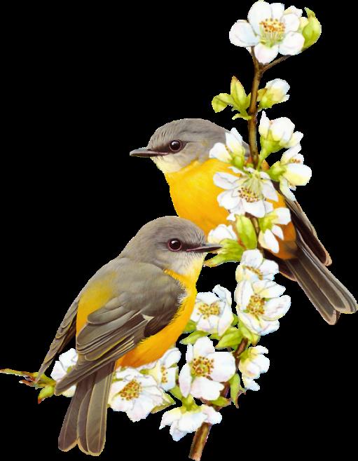 Amazing Birds Gallery messages sticker-4