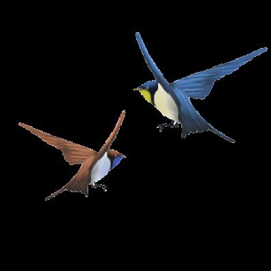 Amazing Birds Gallery messages sticker-5
