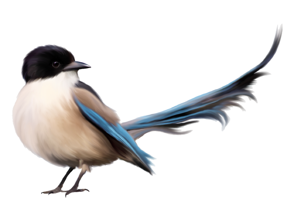 Amazing Birds Gallery messages sticker-7