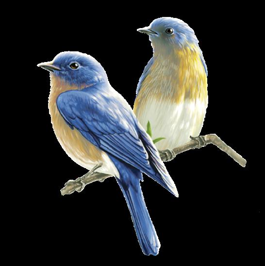 Amazing Birds Gallery messages sticker-6