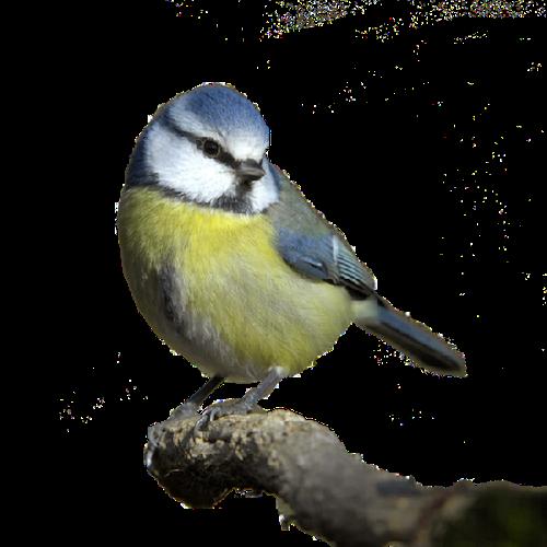 Amazing Birds Gallery messages sticker-9