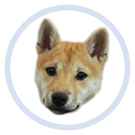 Cute Puppy - Stickers messages sticker-2