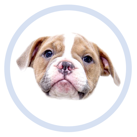 Cute Puppy - Stickers messages sticker-8