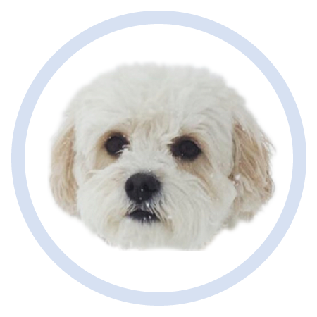 Cute Puppy - Stickers messages sticker-3