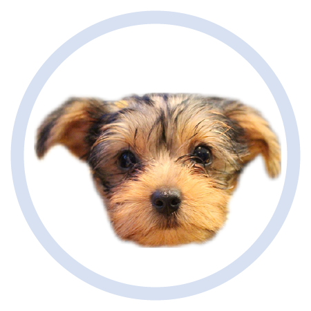 Cute Puppy - Stickers messages sticker-5