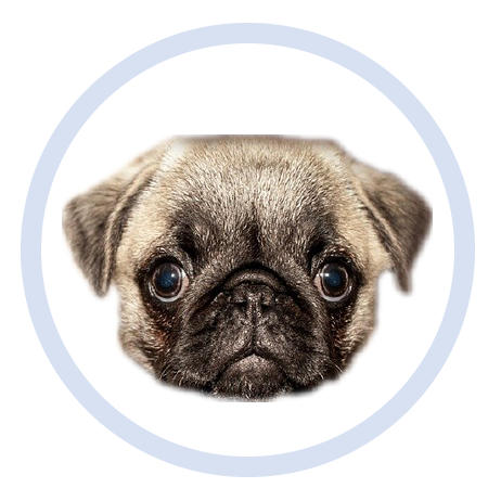 Cute Puppy - Stickers messages sticker-9