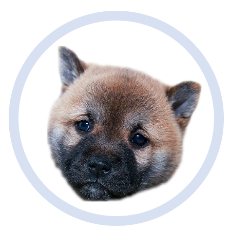 Cute Puppy - Stickers messages sticker-11