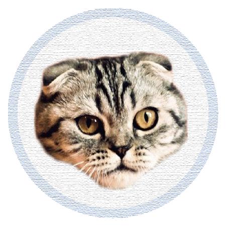 Cute Kitten - Stickers messages sticker-1