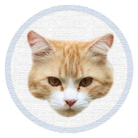 Cute Kitten - Stickers messages sticker-4