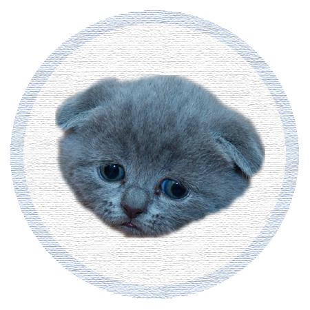 Cute Kitten - Stickers messages sticker-7