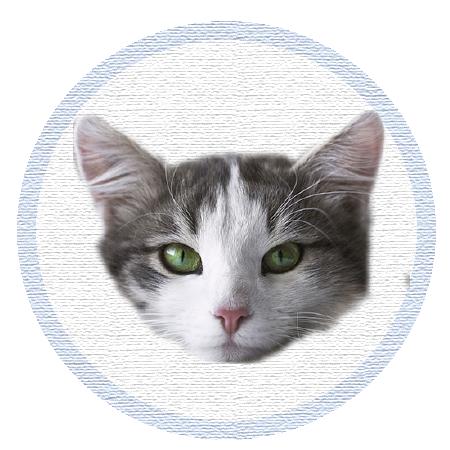 Cute Kitten - Stickers messages sticker-11