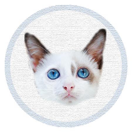 Cute Kitten - Stickers messages sticker-5