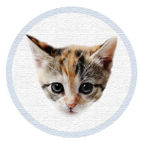 Cute Kitten - Stickers messages sticker-9