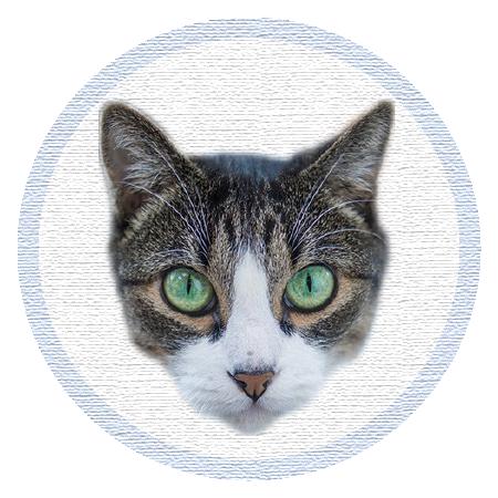 Cute Kitten - Stickers messages sticker-2
