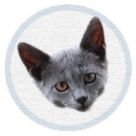 Cute Kitten - Stickers messages sticker-6