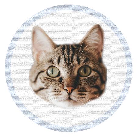 Cute Kitten - Stickers messages sticker-3