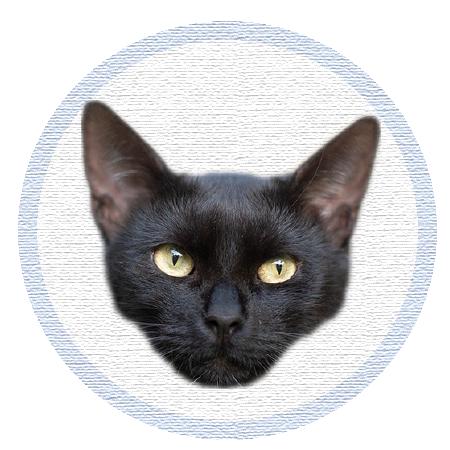 Cute Kitten - Stickers messages sticker-10