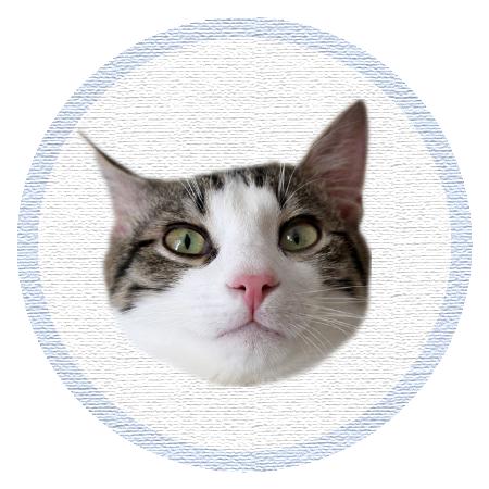 Cute Kitten - Stickers messages sticker-0