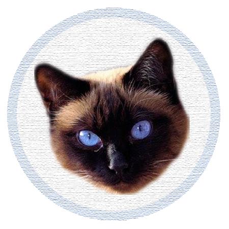 Cute Kitten - Stickers messages sticker-8
