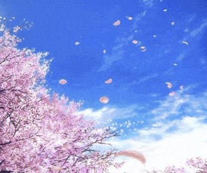 樱花动漫-Sakura Sticker messages sticker-3