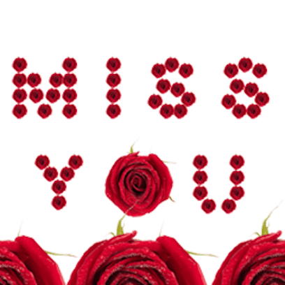 Lovely Roses Sticker messages sticker-6