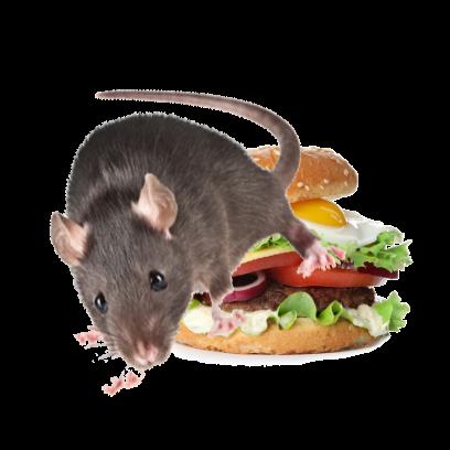 Burger Rats messages sticker-6