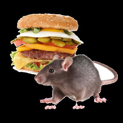 Burger Rats messages sticker-10