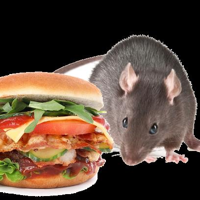 Burger Rats messages sticker-8