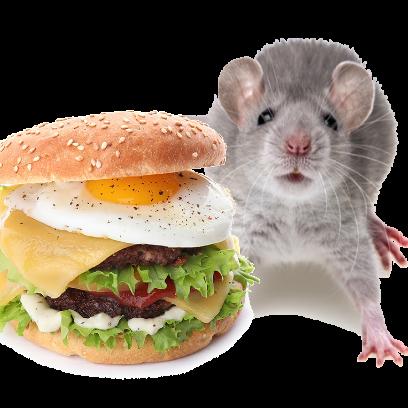 Burger Rats messages sticker-9