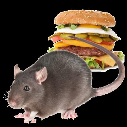 Burger Rats messages sticker-11
