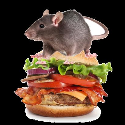 Burger Rats messages sticker-2