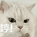 Meow Love+ messages sticker-10