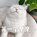Meow Love+ messages sticker-0