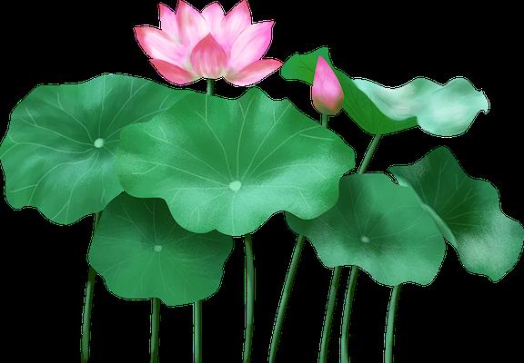 Lotus sticker messages sticker-4
