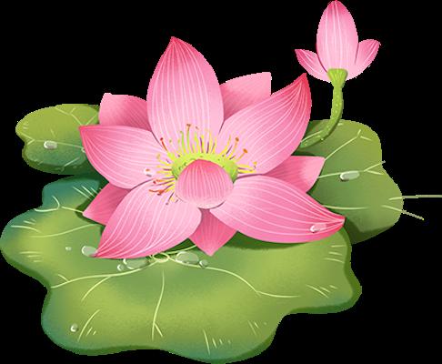 Lotus sticker messages sticker-11
