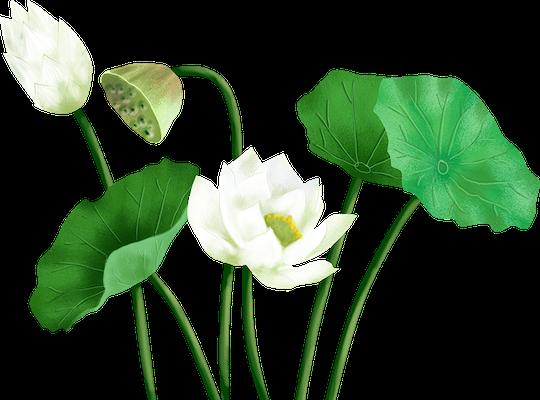 Lotus sticker messages sticker-2